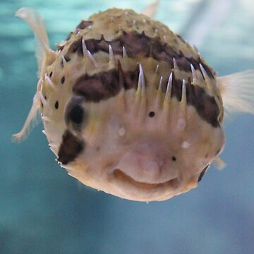 Puffer Fish by MagicTypewriter