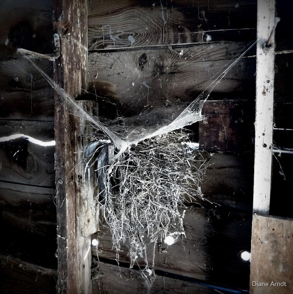 Cob Webs and Birds Nests.. by Diane Arndt