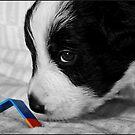 Agility Pup by dedakota