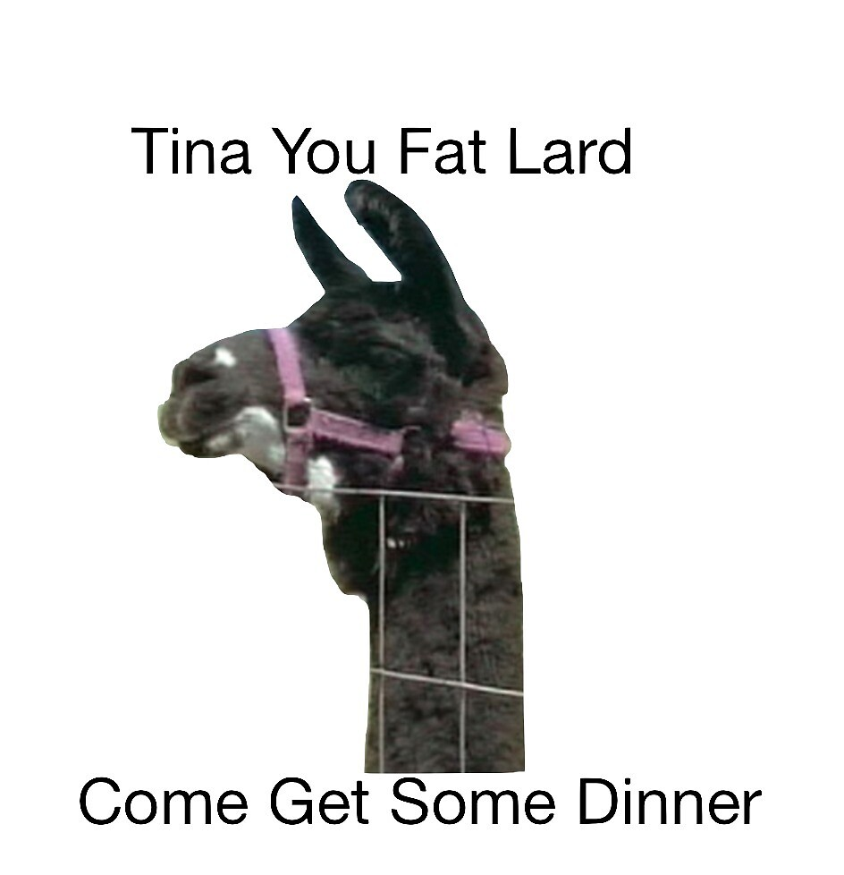 Tina you fat lard come get some dinner  by richterr