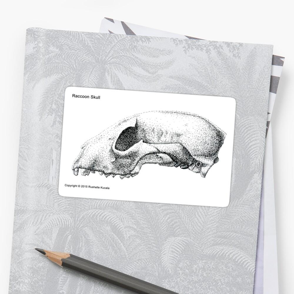 Raccoon Skull Study | Sticker