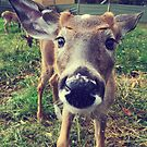 Curious baby deer by jodi payne