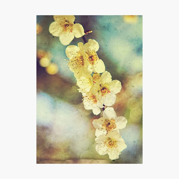 Lovely White Plum Blossoms Vintage Washi Paper Photographic Print