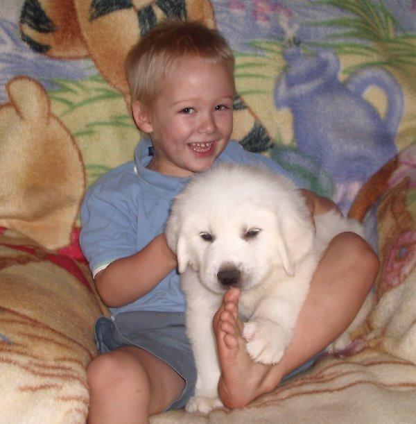 Kerry Blue Terrier Puppy by Freedomfarmz