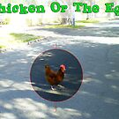 Chicken ....  Problem Or Solution ...  Which Was First ? by Robert Phillips