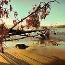 Fallen Beach Tree - Adventure Bay, Bruny Island, Tasmania, Australia by PC1134
