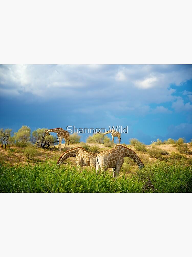 Four Giraffe (Giraffa camelopardalis) feeding. by ShannonPlummer