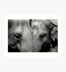 Elephant Mirror Art Print