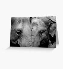 Elephant Mirror Greeting Card