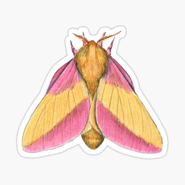 Rosy Maple Moth 2 (Dryocampa rubicunda) Sticker