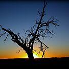 one dead tree by fazza