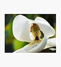 Magnolia Peek Photographic Print