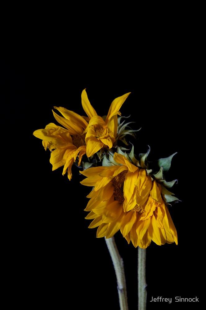 Wilting by Jeffrey  Sinnock