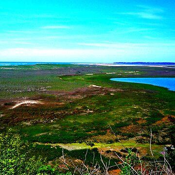 Cape cod landscape by Alexander589