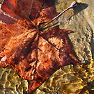 Water Leaf by Michael  Herrfurth