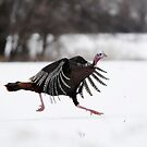 the turkey two step by George  Close