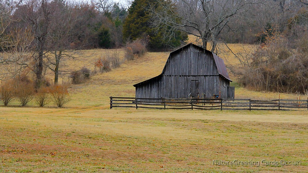 The Little Barn by NatureGreeting Cards ©ccwri