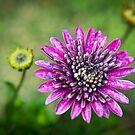 Floral composition by Andrea Rapisarda