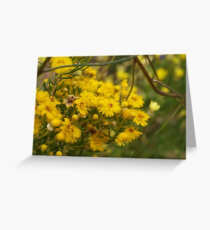 Featherflower in Yellow Greeting Card