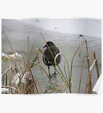 surrey- winter Poster