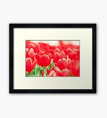 Tulip flowers in spring  Framed Print