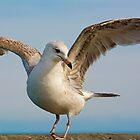 Seagull Dance by TJ Baccari Photography