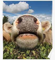 Funny, Amusing, Cow, Portrait Poster