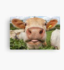 Cow, Funny, Amusing, Portrait Canvas Print