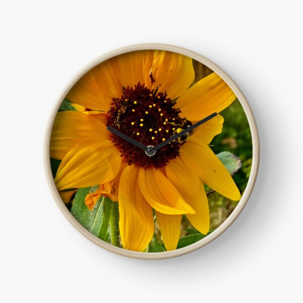 Sunflower and Bumblebee  Clock