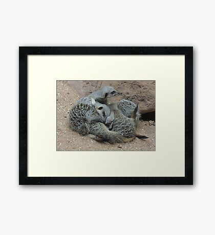 Meerkat Snuggle with Baby Framed Print