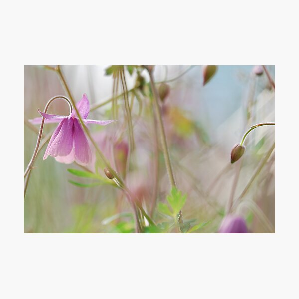 Fairy Garden Photographic Print