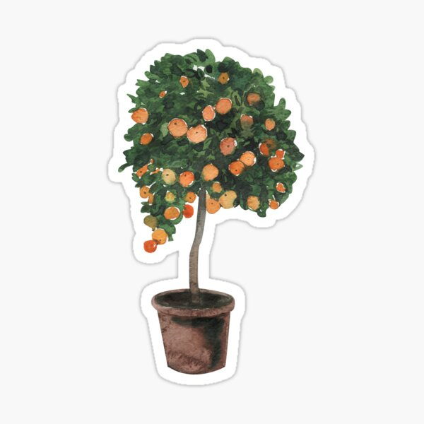 Orange Tree Sticker