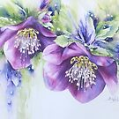 Large Hellebore by Bev  Wells