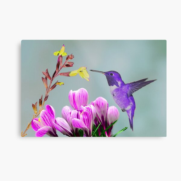 Indigenous  humming Bird Metal Print