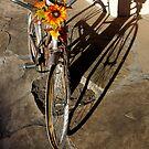 Riding the Rim by Vicki Pelham