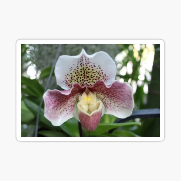 Purple and White Orchid Sticker