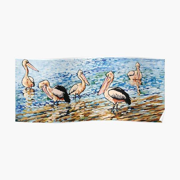 Pelicans Basking in the Morning Sunshine Poster