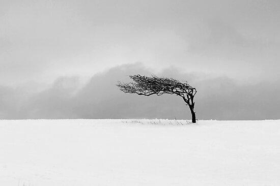 Winter Tree by fernblacker