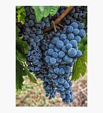 Mudgee Grapes Photographic Print