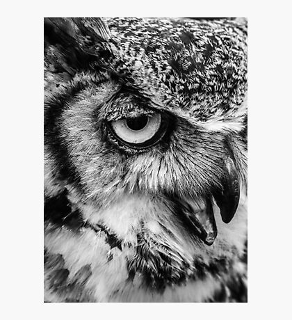 African Spotted Owl Photographic Print