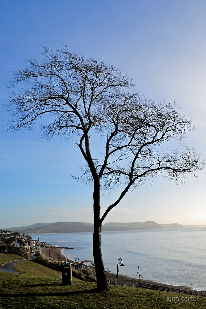 A Tree By The Sea by lynn carter