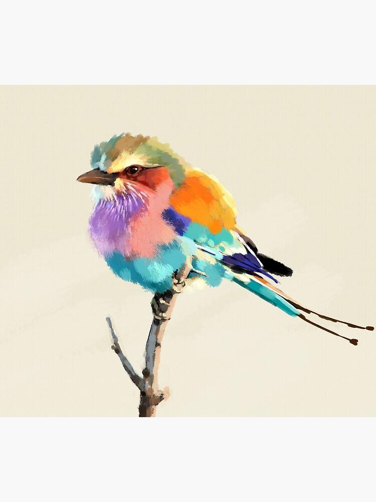 Gay Finch by garycollett