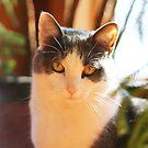 Sunbathing Cat by CAPhotography