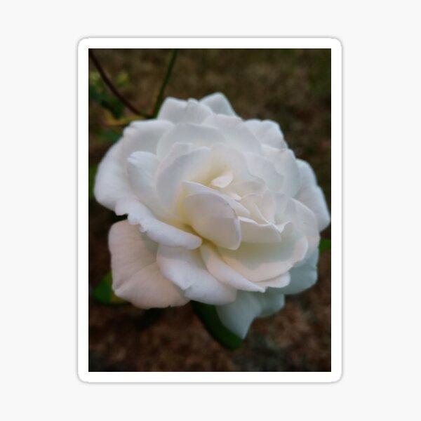 Rose Blanche Sticker