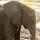 Elegant Elephant by Gabrielle Camilleri