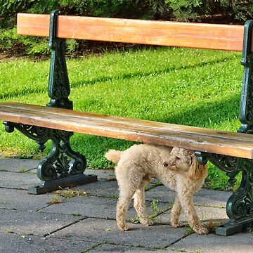 Dog waiting in parc by skyfish