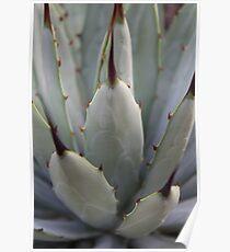 Agave Thorns -Cactus Macro, Natural Pattern Poster