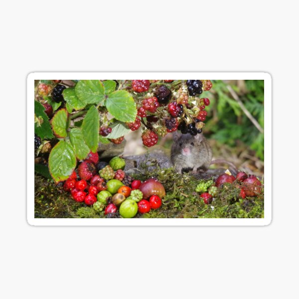 Little mouse and brambles Sticker