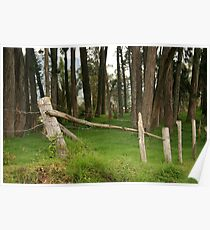 Barbed Wire Fence Among Trees Poster