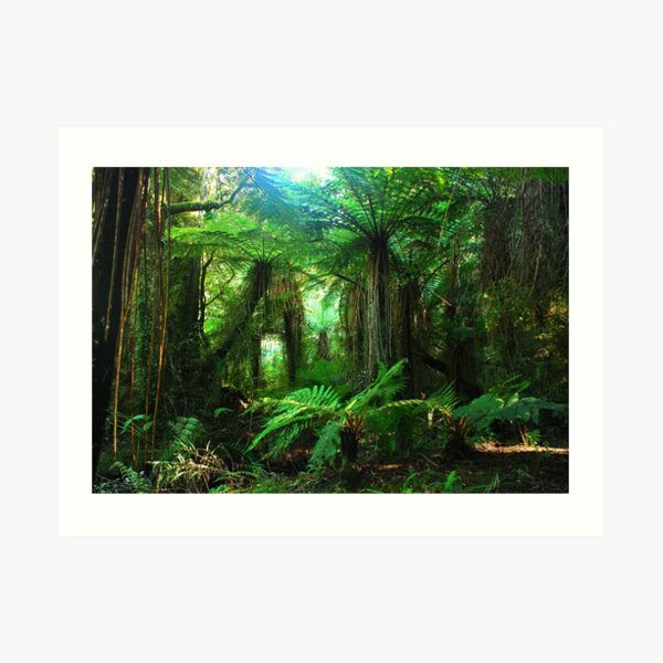 Rainforest New Zealand Art Print